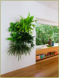 indoor living wall planter home design ideas