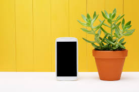 charge your phone with a plant bio home by lam soon