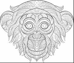 birds of africa coloring pages alphabrainsz net