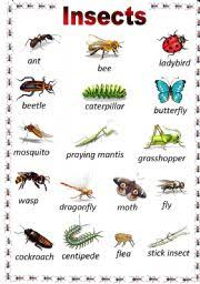 worksheet insects poster