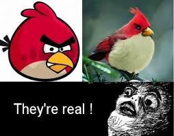 Angry Birds Meme - angry birds meme by d switch memedroid