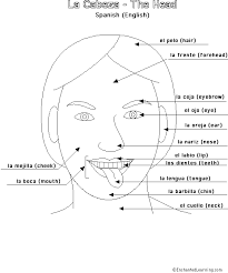 the body in spanish the face enchantedlearning com