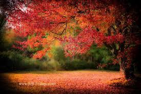 england u0027s fall foliage england fall foliage