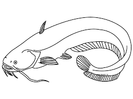 awesome free printable catfish fish coloring pages for kids