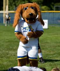 10 cool facts about setters pace s mascot is an