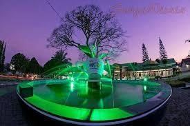 Teh Rolas Wonosari menyambut semangat pagi di kebun teh lawang surgawisata