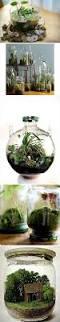 102 best mason jar gardens u0026 terrariums images on pinterest