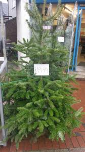 real christmas trees for sale real christmas trees for sale at hyper stapleford community