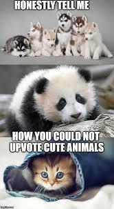 panda imgflip