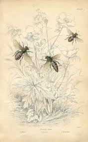 vintage printable honey bees instant art the graphics fairy