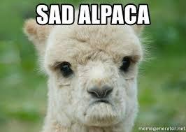 sad alpaca sad alpaca meme generator