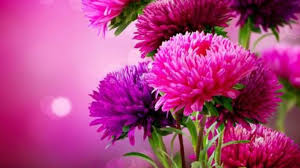 Flower Pictures Flowers Flowers Nature Colors Romantic Pink Beautiful Serenade