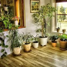 live indoor plants buy indoor plants online at nursery live indoor plants online