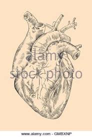 drawing human heart with flowers stock vector art u0026 illustration