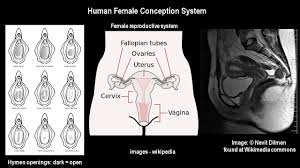 Hymen Female Anatomy The Alternate Jesus Part 2a Enthusiastic Exuberance