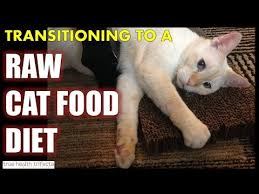 how to transition your cat to a raw food diet healthy cat