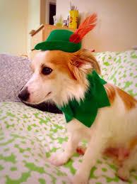 Yorkie Costumes Halloween Peter Pan Hat Dog Costume Marvinwoofski Etsy Dogs