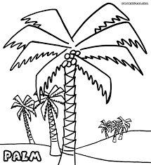 palm tree coloring pages coloring pages to download and print