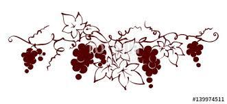 design elements vine graphic vector illustration grapes