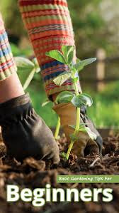 recommended tips gardening tips archives recommended tips