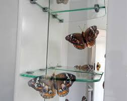 buckeye butterfly etsy
