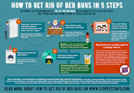 how to get rid of bed bugs fast 8 best bed bug traps sprays and