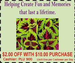 buy shade trees ornamental trees evergreen tree
