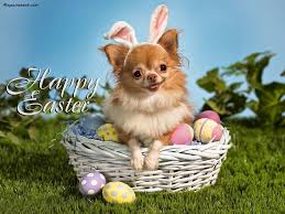 puppy thanksgiving happy easter with a cute puppy pictures photos and images for