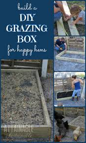 261 best images about backyard chickens on pinterest the