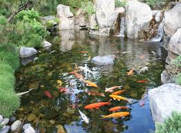 fish for backyard pond pool design ideas