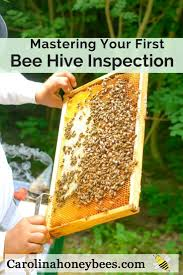 968 best beekeeping tips and tricks images on pinterest bee