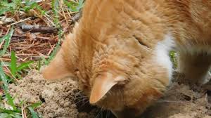 cat and the backyard gopher youtube