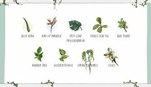 poisonous plants for dogs avoid these plants with pets