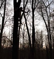 how to prevent tree stand falls