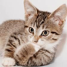 Image 9 Best Grumpy Cat - empty grumpy cat meme grumpy best of the funny meme