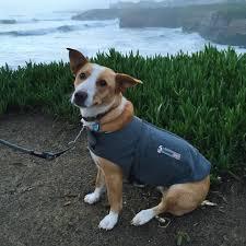 boxer dog t shirts uk thundershirt the best dog anxiety treatment