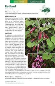 east texas native plants wild edible plants of texas a pocket guide to the identification
