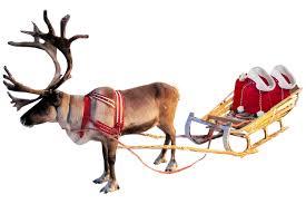 christmas reindeer christmas reindeer and sleigh