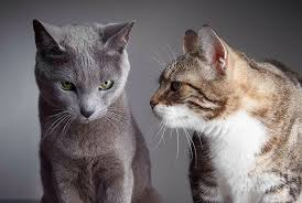 Meme Generator Two Pictures - two cats blank template imgflip