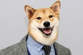 Shiba Inu Meme - bullshit menswear dog owners make 15k a month off their shiba inu