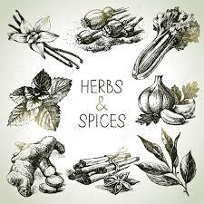 les herbes de cuisine herbes de cuisine et les épices icônes de croquis dessinés à la