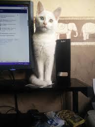 Cat Photo Album My Cat Sacha U003d Album On Imgur