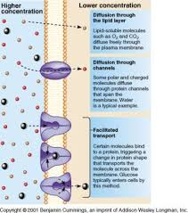 2 2 the transport of substances across a cell membrane by ms