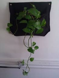 hanging plant pocket 8 steps with pictures