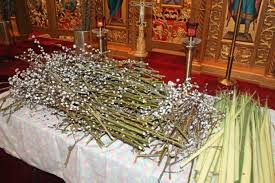 where to buy palms for palm sunday blessing of palms willows begins journey to resurrection