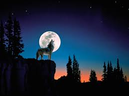 wolf howling at the moon wallpapers gallery 41 plus juegosrev