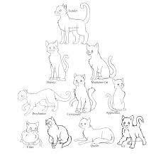 13 images of by erin hunter warrior cat coloring pages warrior