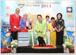 yarrow affenpinscher thailand international dog show 2014 fci6 thailand dog show