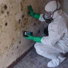 mold removal and remediation experts of aspen boulder and more