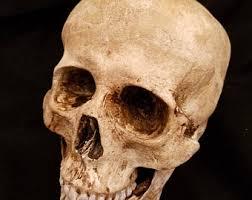 skulls etsy